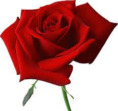 Dear Rosebud